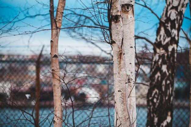 Неглубокий фокус фото ветки дерева