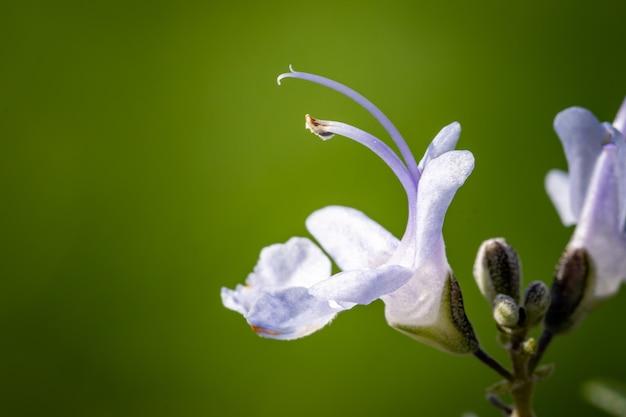 Fuoco poco profondo di fiori viola