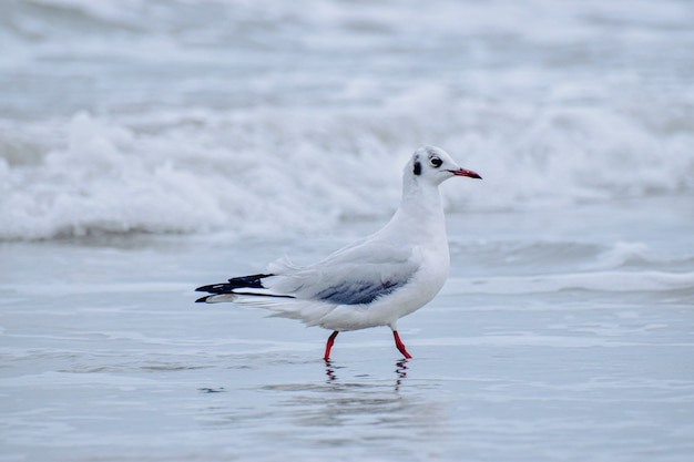Shallow focus of a seagull at the beach on a gloomy day