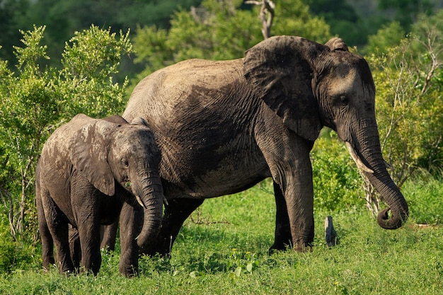 Shallow focus shot of a mother and a baby elephant walking on a grass field at daytime