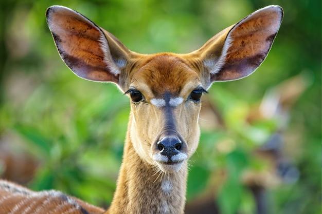 Снимок красивой антилопы с мелким фокусом