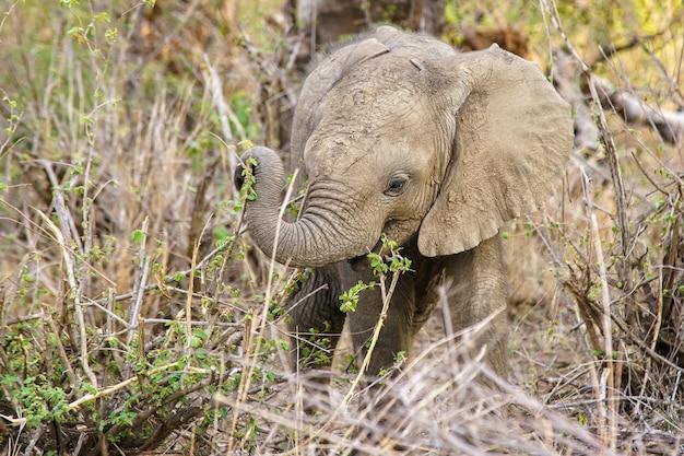 식물을 먹는 귀여운 아기 코끼리의 얕은 초점 샷
