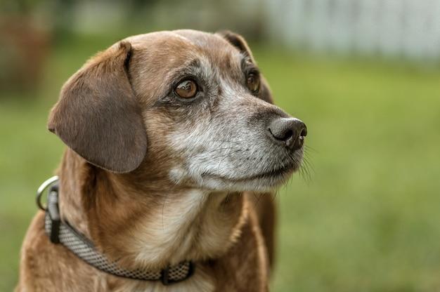 Неглубокий снимок собаки, смотрящей влево