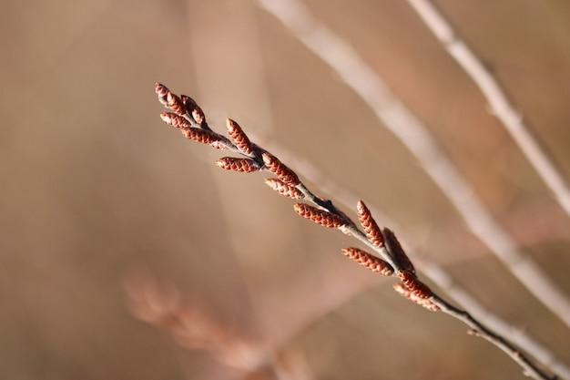 柳の枝の浅いフォーカスショット