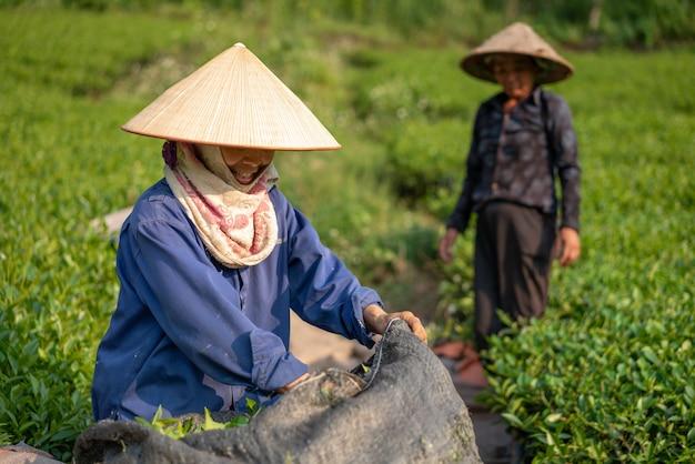 Неглубокий снимок японских пожилых людей, работающих в поле
