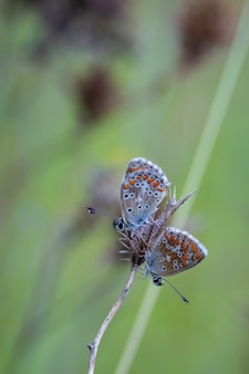 Shallow focus shot of two butterflies in their natural environment