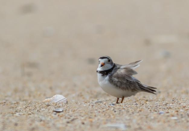 Fuoco poco profondo di un piccolo uccello in una giornata uggiosa in spiaggia