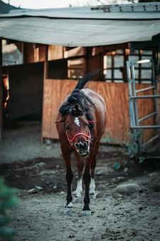 赤いハーネスを身に着けている茶色の馬の浅い焦点の垂直ショット