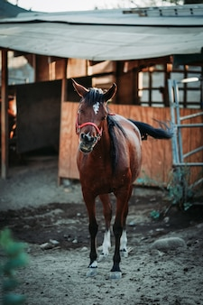 Shallow focus vertical view of a brown horse wearing a red harness with a blurred background