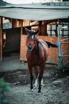 背景がぼやけた赤いハーネスを身に着けている茶色の馬の浅い焦点の垂直方向のビュー