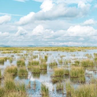 植物が生えている浅い池と青い曇り空