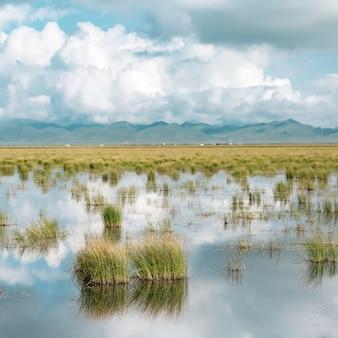 그것에 성장하는 식물과 푸른 흐린 하늘 얕은 연못