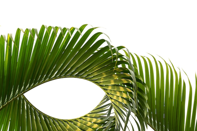 Форма размытия движения кокосового листа, изолированные на белом фоне