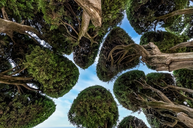 スペイン、マドリッドのブエンレティーロ公園にあるヒノキの木の形をした王冠。