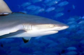 Sharks ain't scary