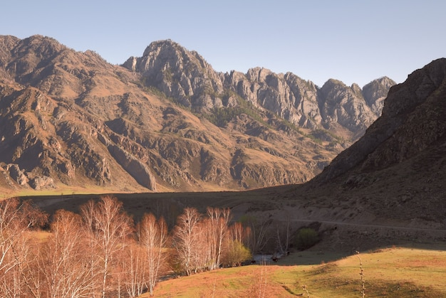 Резкие высокие отвесные скалы березы на солнечном лугу контрастный утренний свет чистая природа сибири