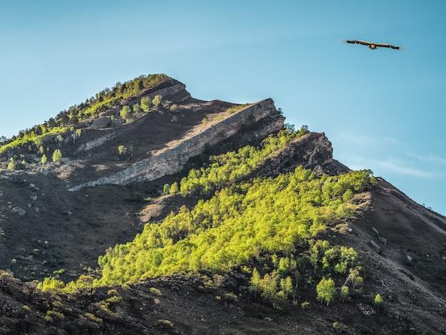 青い空を背景に緑の森に覆われた鋭い山頂。ワシが山頂を飛び越えます。