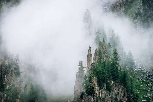 濃霧の中の針葉樹とロッキー山脈の鋭い石