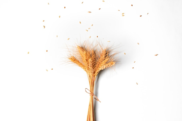 Sheaf of golden rye ears, dry cereals spikelets on white wall