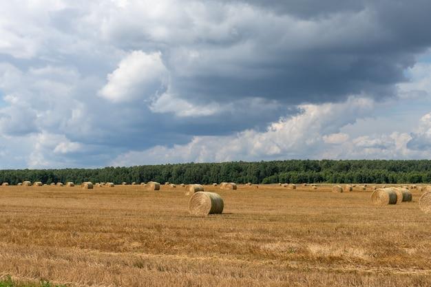 Сноп соломы в поле. деревенский пейзаж