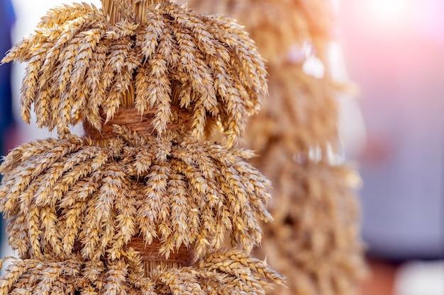 日光の下で熟した耳を持つ小麦の束