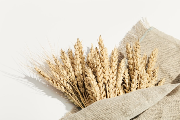 Sheaf of wheat ears close up natural cereal plant harvest time concept