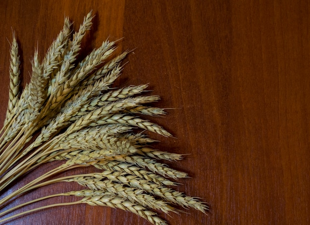 A sheaf of wheat ears isolated on a white background