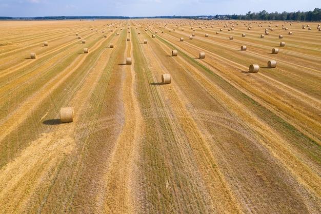 Снопы соломы на пшеничном поле