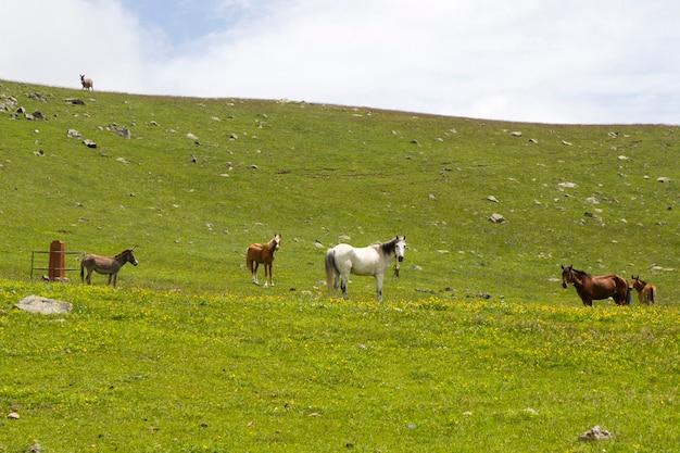 Овцы и козы в долине. домашний животный мир. ферма в горах. большая группа овец.