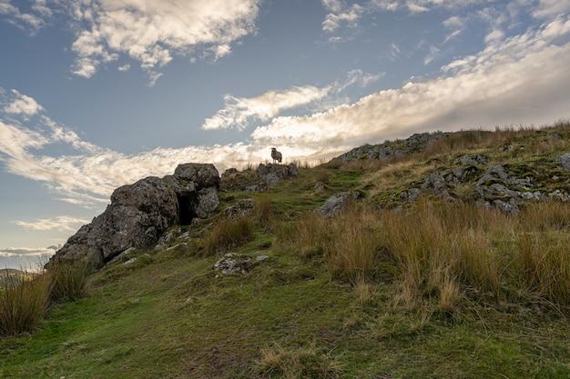 日没時に岩だらけの丘で羊がかすめる