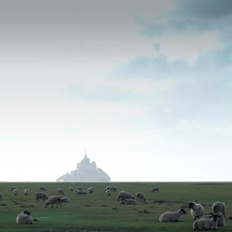 Pecore al pascolo sull'erba davanti a un edificio
