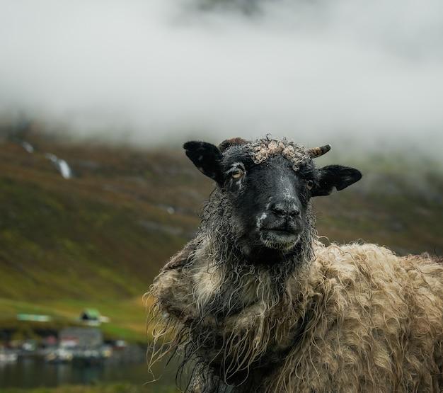山での羊の放牧