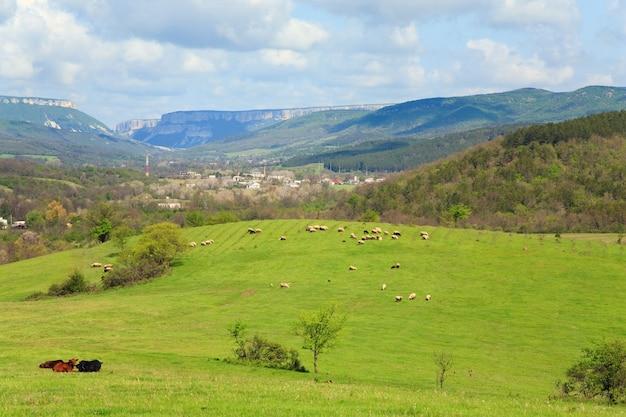 村の近くの山の丘の羊の群れ