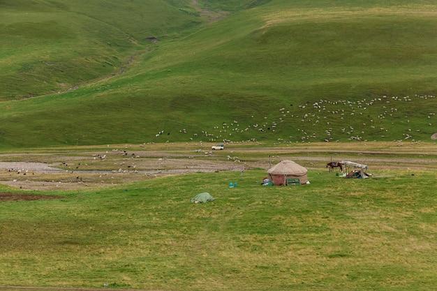 Овцы у русла горной реки, отара овец, пасущихся на холме на зеленом лугу, пасущиеся овцы на зеленых холмах плато ассы казахстан.