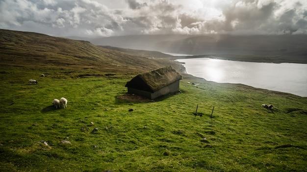 Овцы на фарерских островах