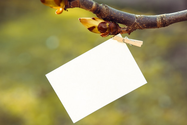 Sheet of white paper on a clothespin on a chestnut branch