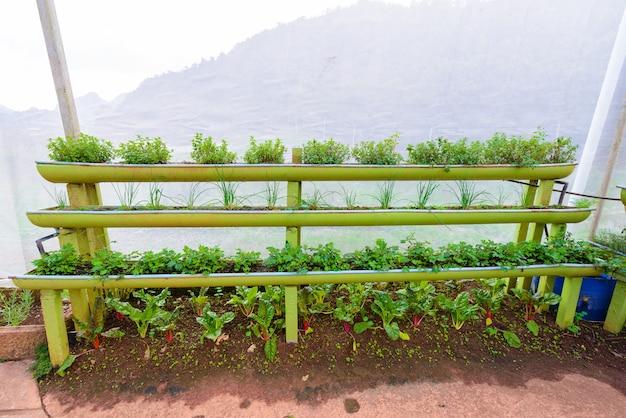 Shelf vegetable garden