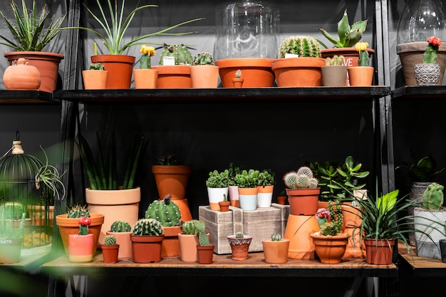 Shelf with cacti in the store green succulent in a clay pot in loft interior in scandinavian style