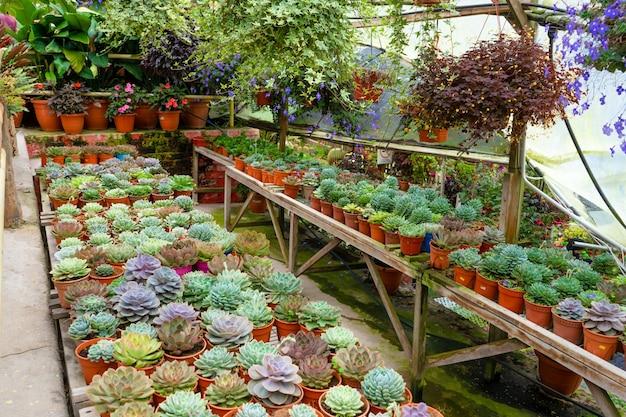 꽃 가게에 다육 식물이 있는 선반.