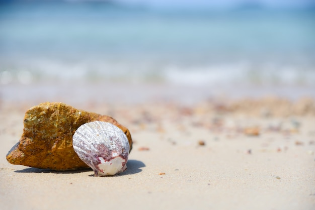 A shell on the beach with blurred blue sea background. summer day concept.
