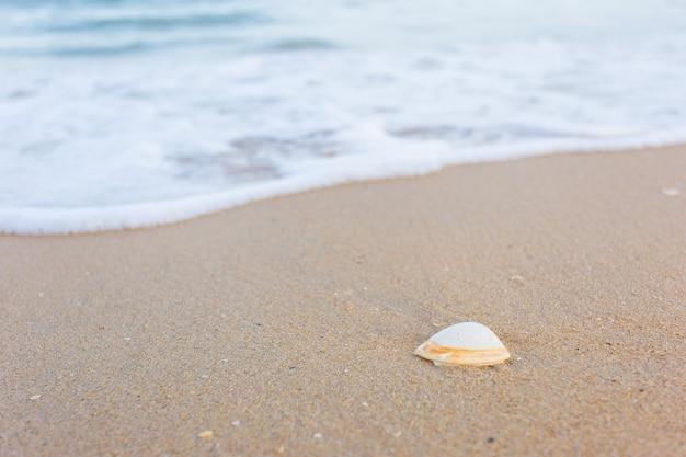 貝殻は砂の上にあり、海水は自然の背景と海の景色のテーマとして砂の上を洗い流しています。