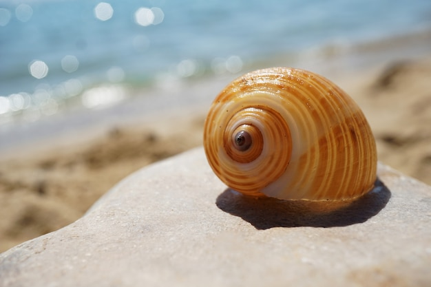 Раковина лежит на песке у моря