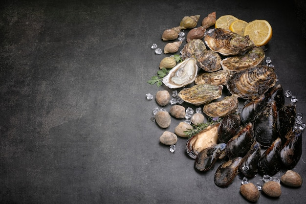 Shell, mussel, oyster, clam, sea snail on black background with space for writing