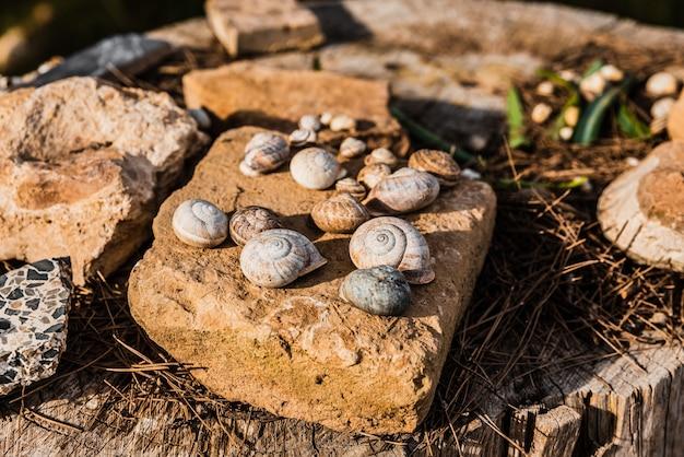 庭の岩や木の装飾として使用するために収集された空のカタツムリの殻