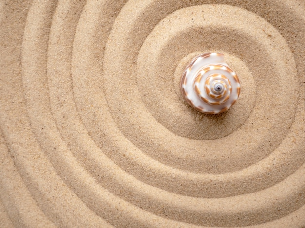 Shell on the sand in the shape of a spiral
