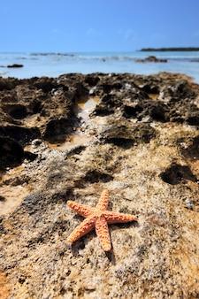 카리브해 해안선에 쉘 바다 스타