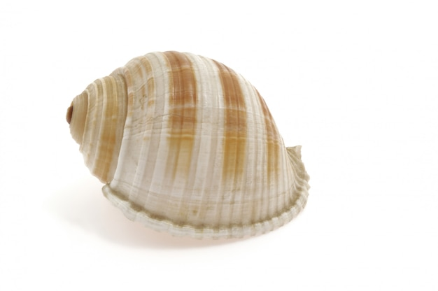 Shell of a snail on white background, spiral