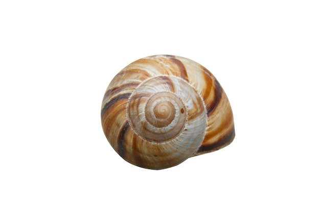 Shell with path isolated on white.