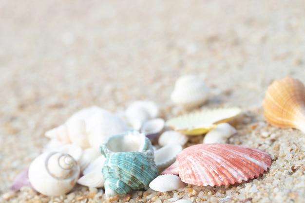 Моллюски на пляже