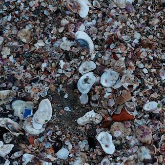 Shells on the beach, sayulita, nayarit, mexico